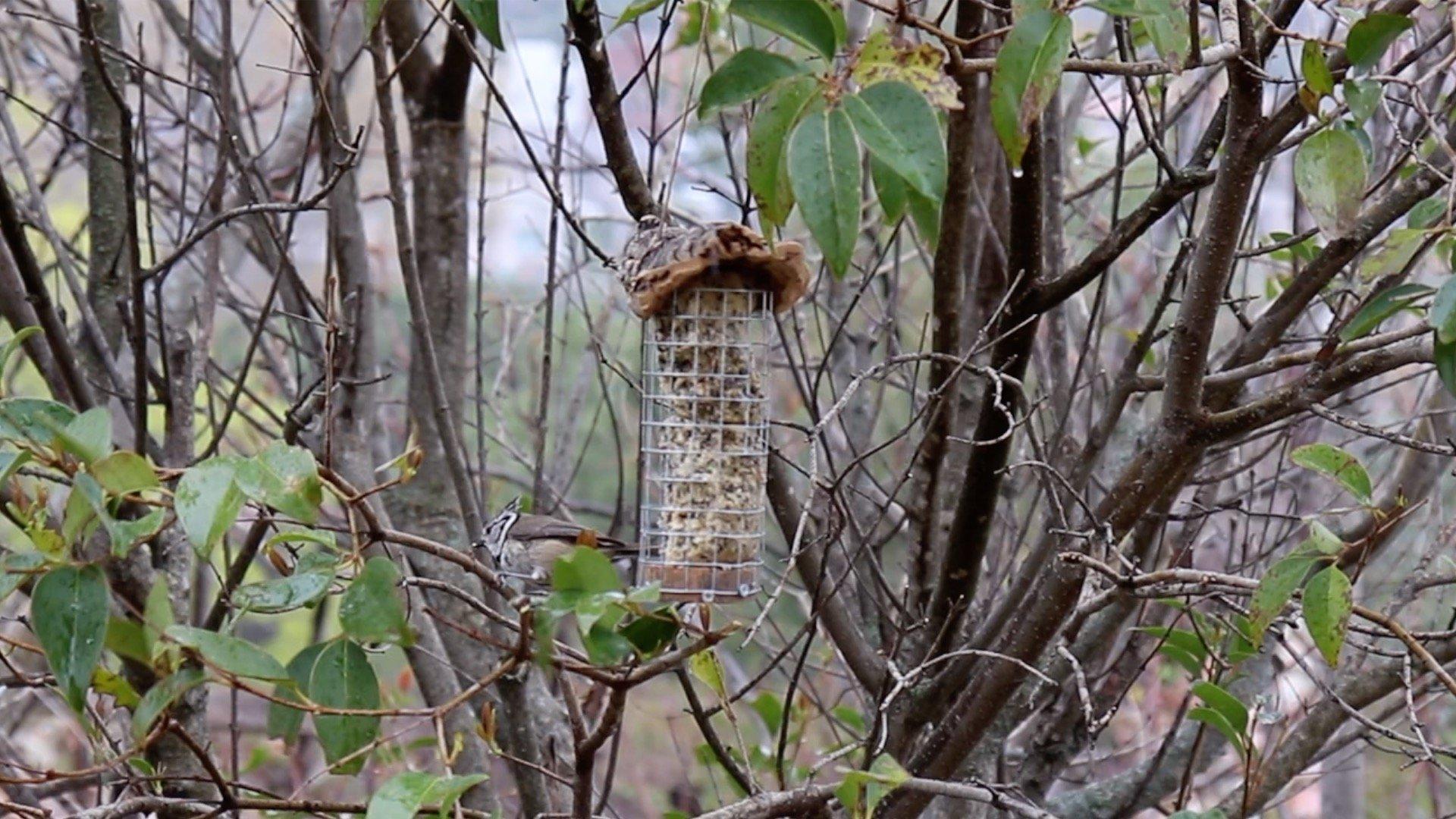 Web de Naturaleza